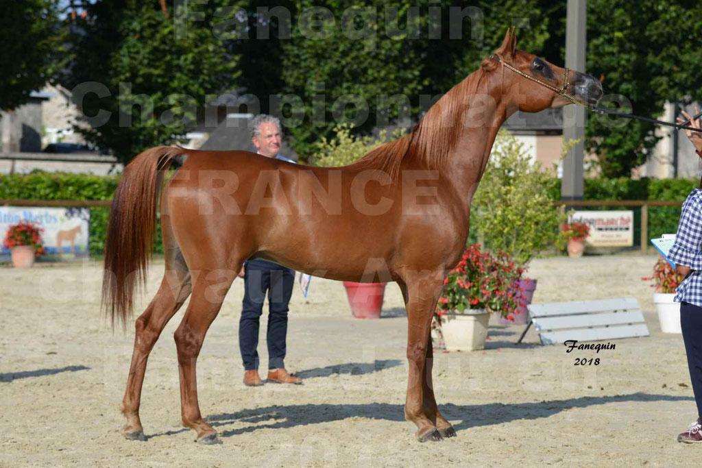 Championnat de FRANCE de chevaux Arabes à Pompadour 2018 - MAAMAR ISHANE - Notre Sélection - 21
