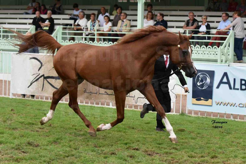 International Arabian Horse Show B de VICHY 2016 - DZHARI NUNKI - Notre Sélection - 03