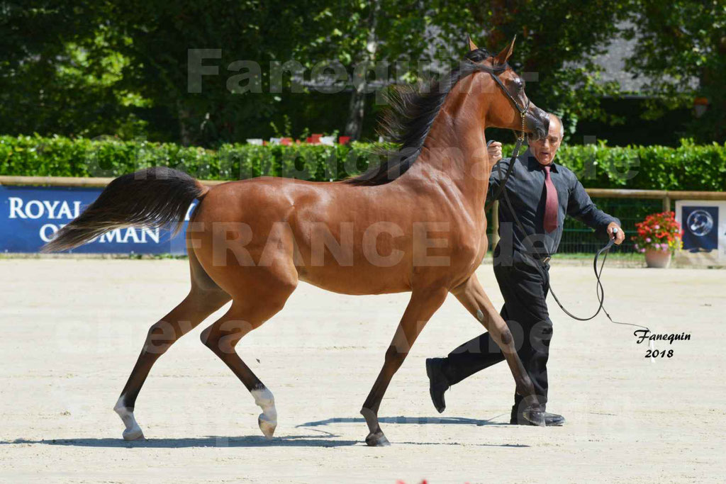 Championnat de FRANCE des chevaux Arabes à Pompadour en 2018 - SH CHARISMA - Notre Sélection - 26