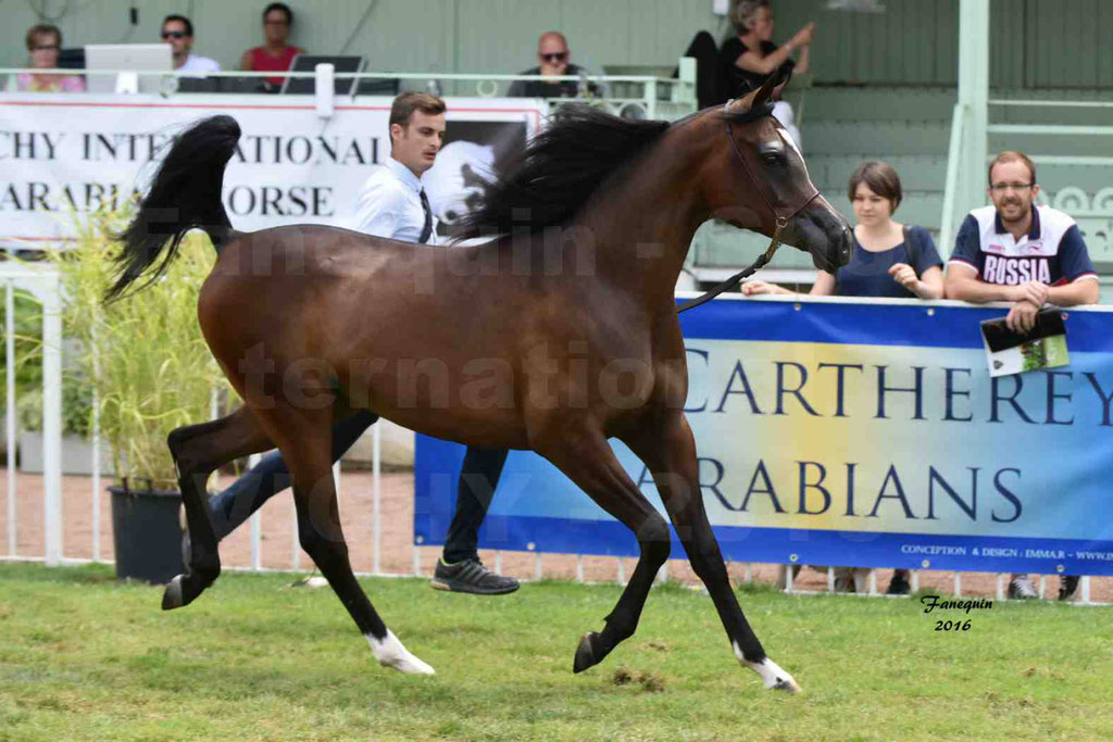 International Arabian Horse Show B de VICHY 2016 - ESMAELIA AL HEVAN - Notre Sélection - 08