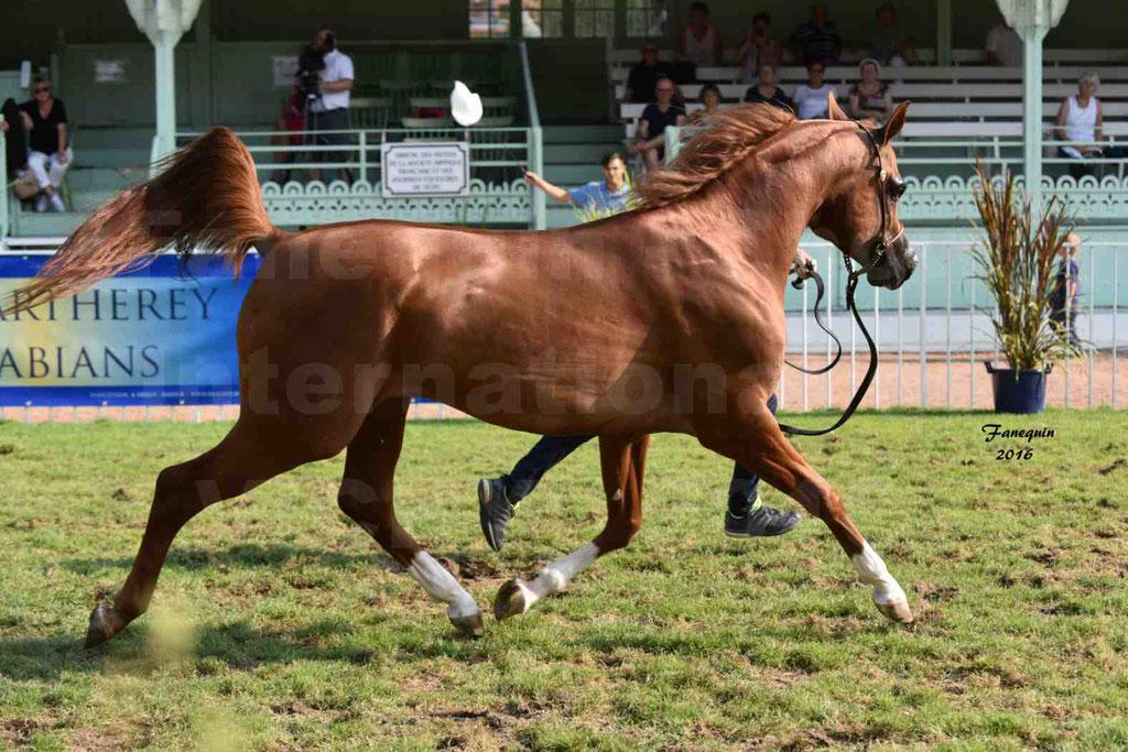 International Arabian Horse Show B de VICHY 2016 - DZHARI NUNKI - Notre Sélection - 22