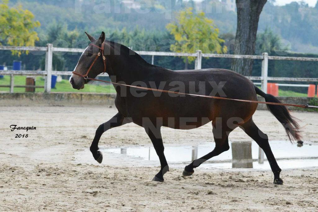 Confirmation de chevaux LUSITANIENS aux Haras d'UZES Novembre 2018 - LOUNA DU CASTEL - 19