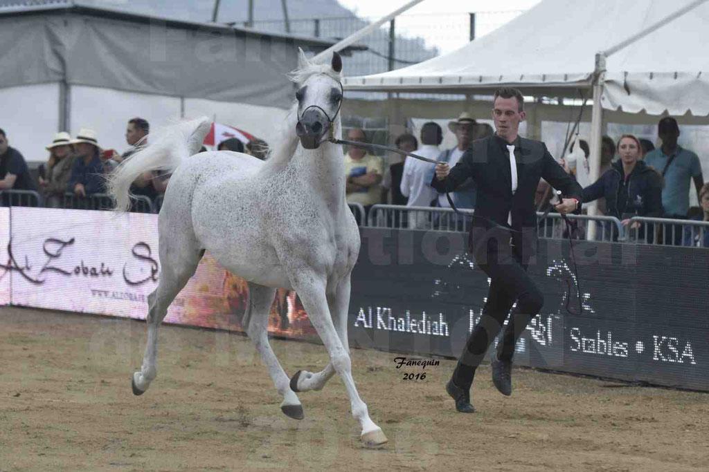 Championnat du Pur-Sang Arabe de la Méditerranée et des pays Arabes - MENTON 2016 - MAGIC MA CHERIE - C 087