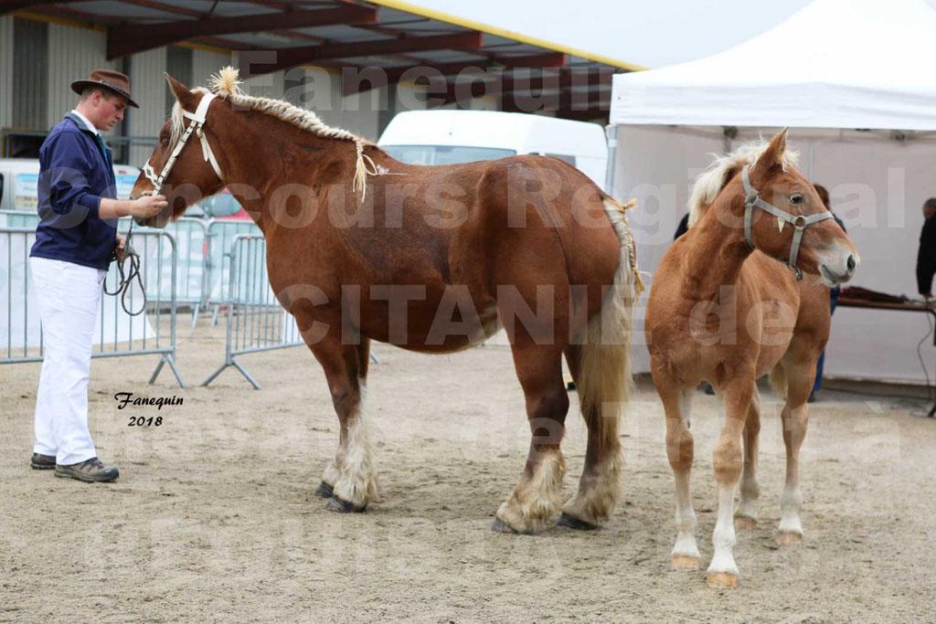"""Concours Régional """"OCCITANIE"""" Modèles et Allures de chevaux de trait à REQUISTA en 2018 - PORTRAITS - 09"""
