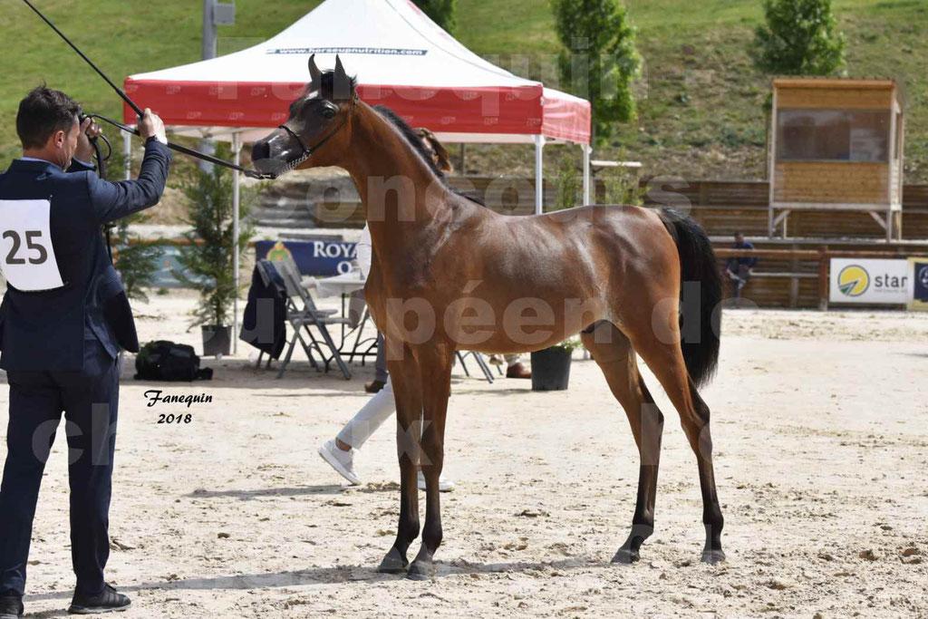 Concours Européen de chevaux Arabes à Chazey sur Ain 2018 - BO AS PRINCE SHAKAR - Notre Sélection - 6