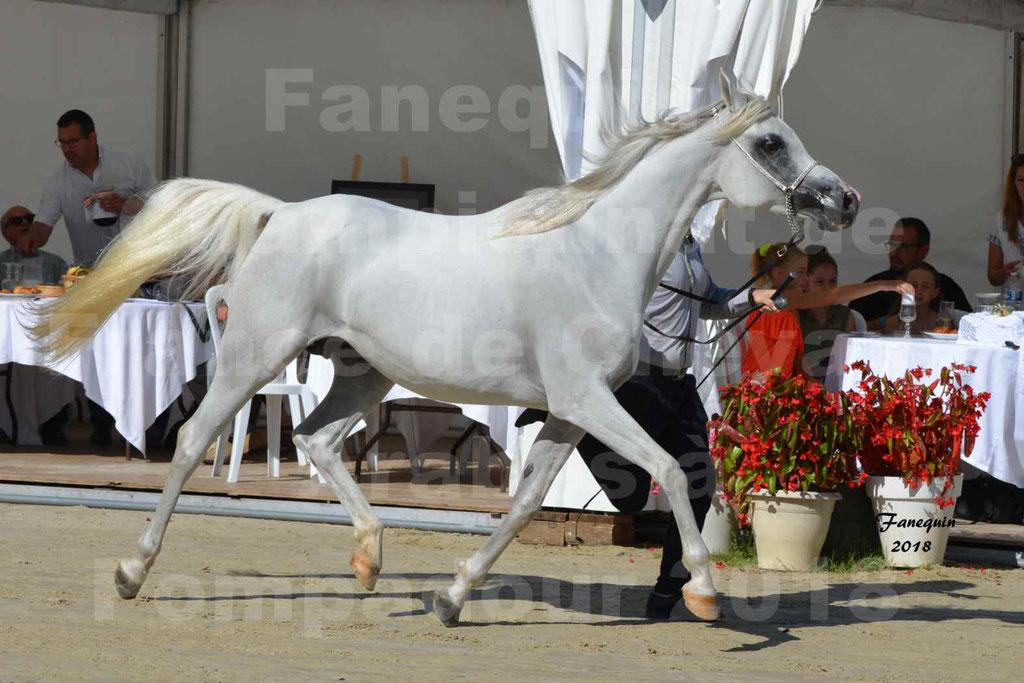 Championnat de FRANCE de chevaux Arabes à Pompadour en 2018 - ESTALIA - 09