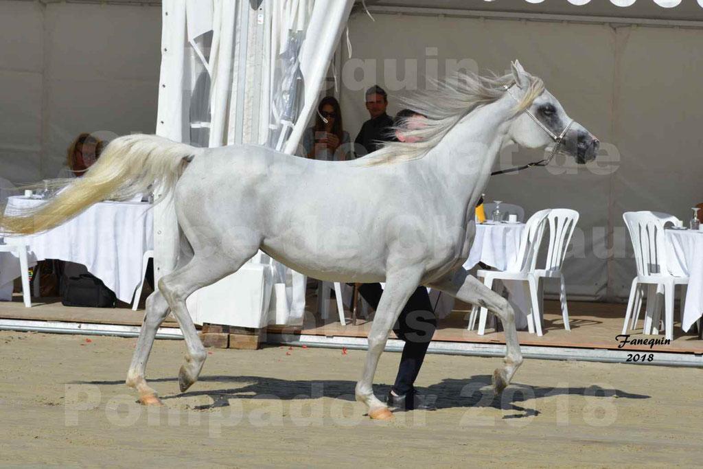 Championnat de FRANCE de chevaux Arabes à Pompadour en 2018 - ESTALIA - 12