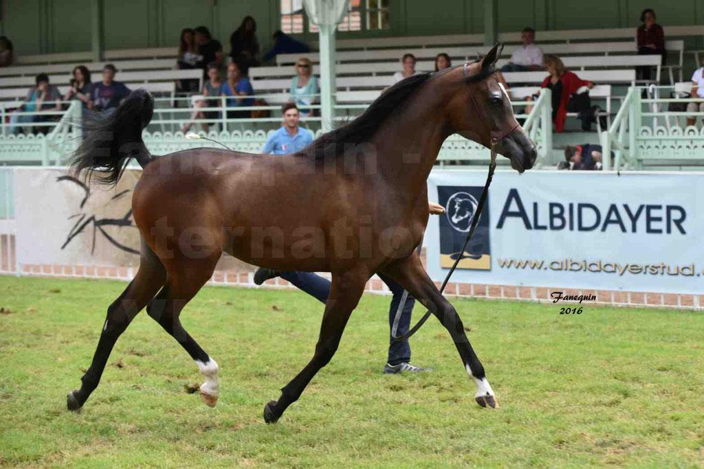 International Arabian Horse Show B de VICHY 2016 - ESMAELIA AL HEVAN - Notre Sélection - 11