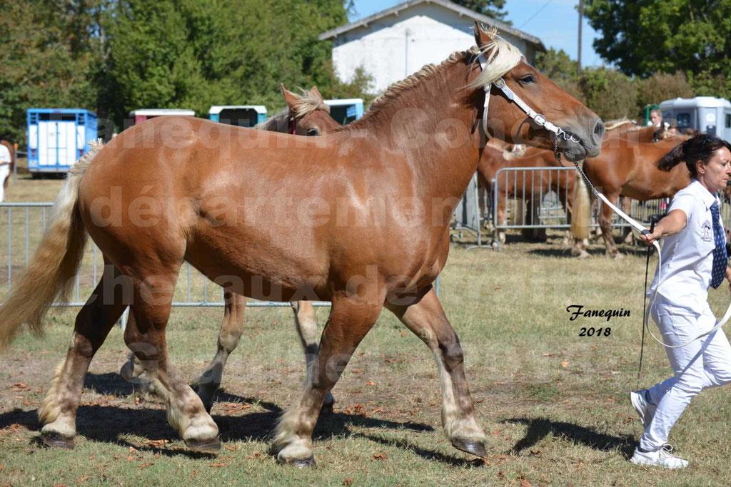 Concours départemental de chevaux de traits à GRAULHET en 2018 - Elevage POUJADE - Notre Sélection - 12