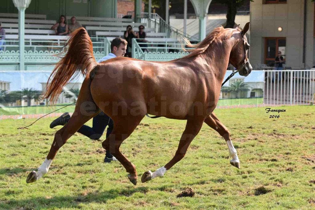 International Arabian Horse Show B de VICHY 2016 - DZHARI NUNKI - Notre Sélection - 26