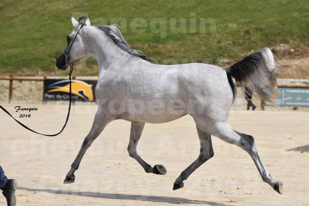 Concours Européen de chevaux Arabes à Chazey sur Ain 2018 - FATIN ALBIDAYER - Notre Sélection - 14