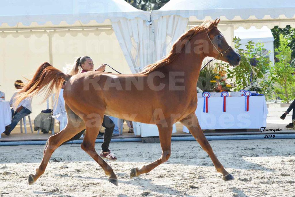 Championnat de FRANCE de chevaux Arabes à Pompadour 2018 - MAAMAR ISHANE - Notre Sélection - 04