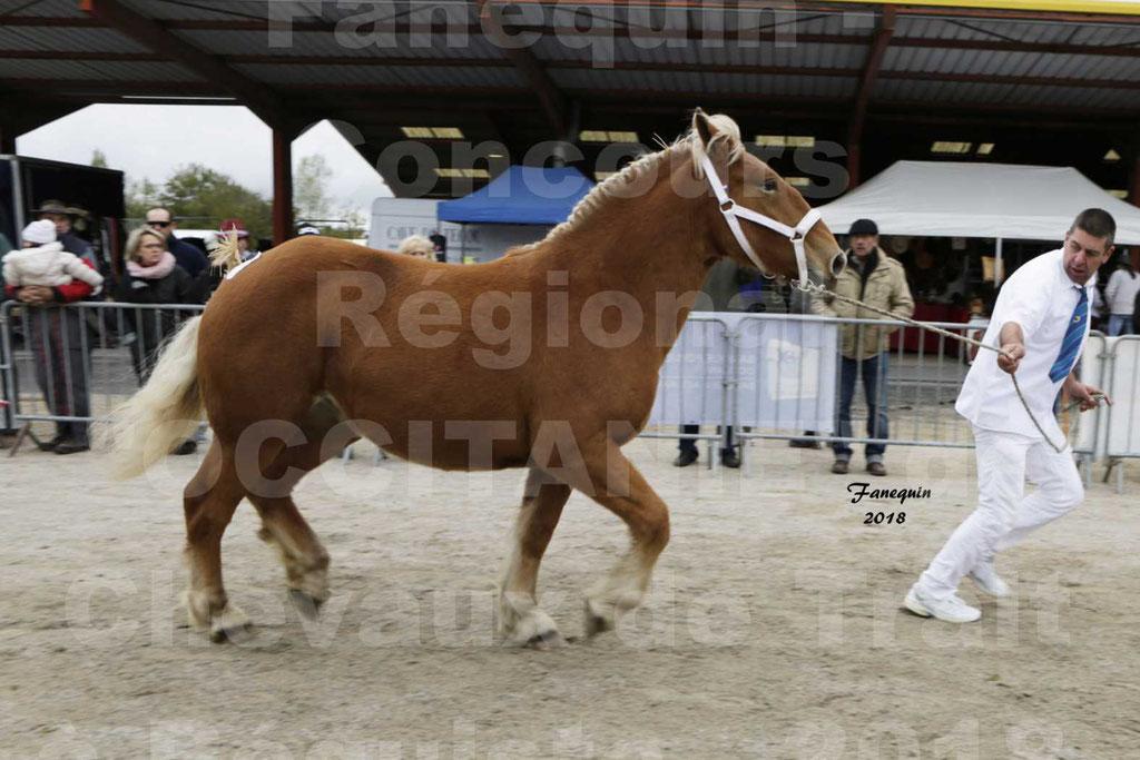 """Concours Régional """"OCCITANIE"""" de Chevaux de Traits à REQUISTA en 2018 - HIRONDELLE DU SOIR - 08"""