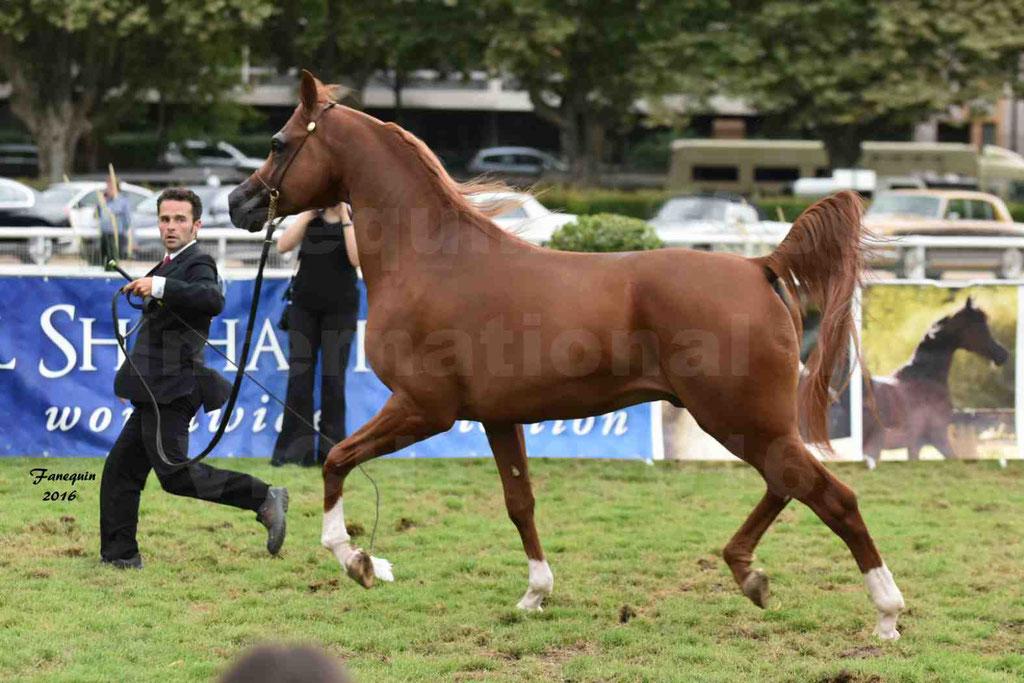 International Arabian Horse Show B de VICHY 2016 - DZHARI NUNKI - Notre Sélection - 10