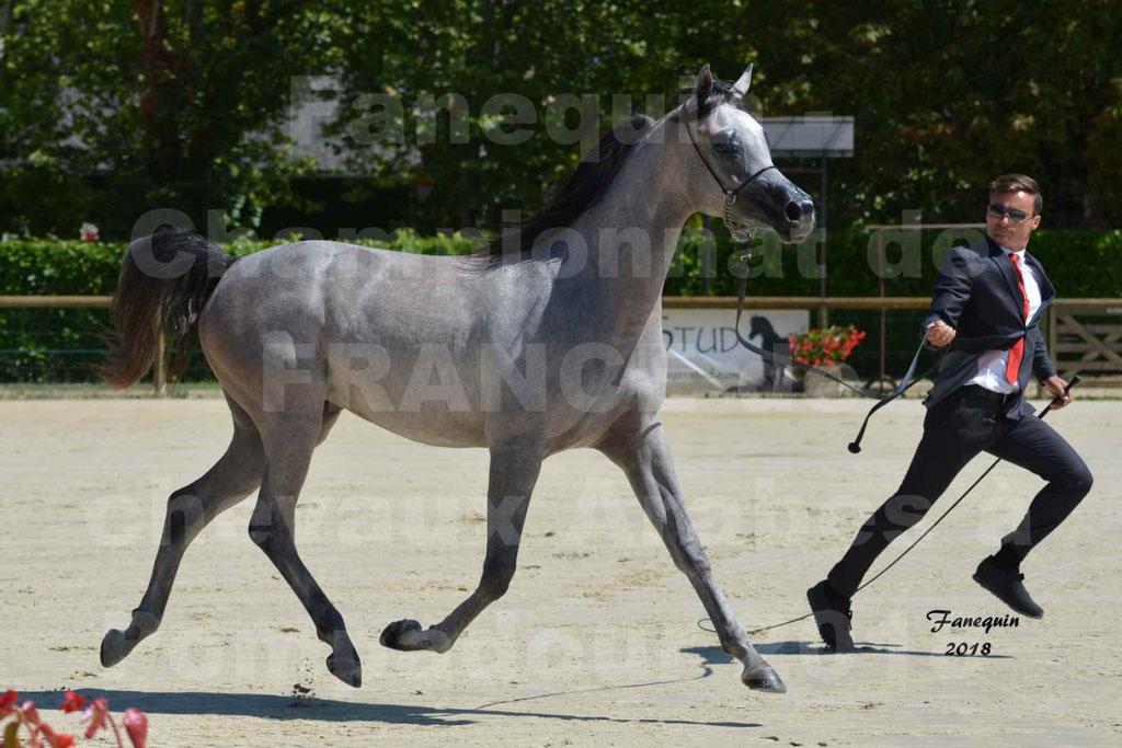 Championnat de FRANCE de chevaux Arabes à Pompadour en 2018 - SANIA DU CAYRON - Notre Sélection - 17
