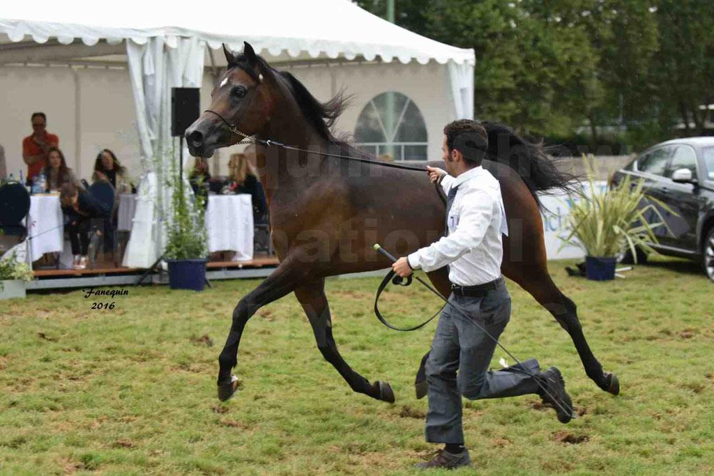 International Arabian Horse Show B de VICHY 2016 - MILLIAR - Notre Sélection - 29
