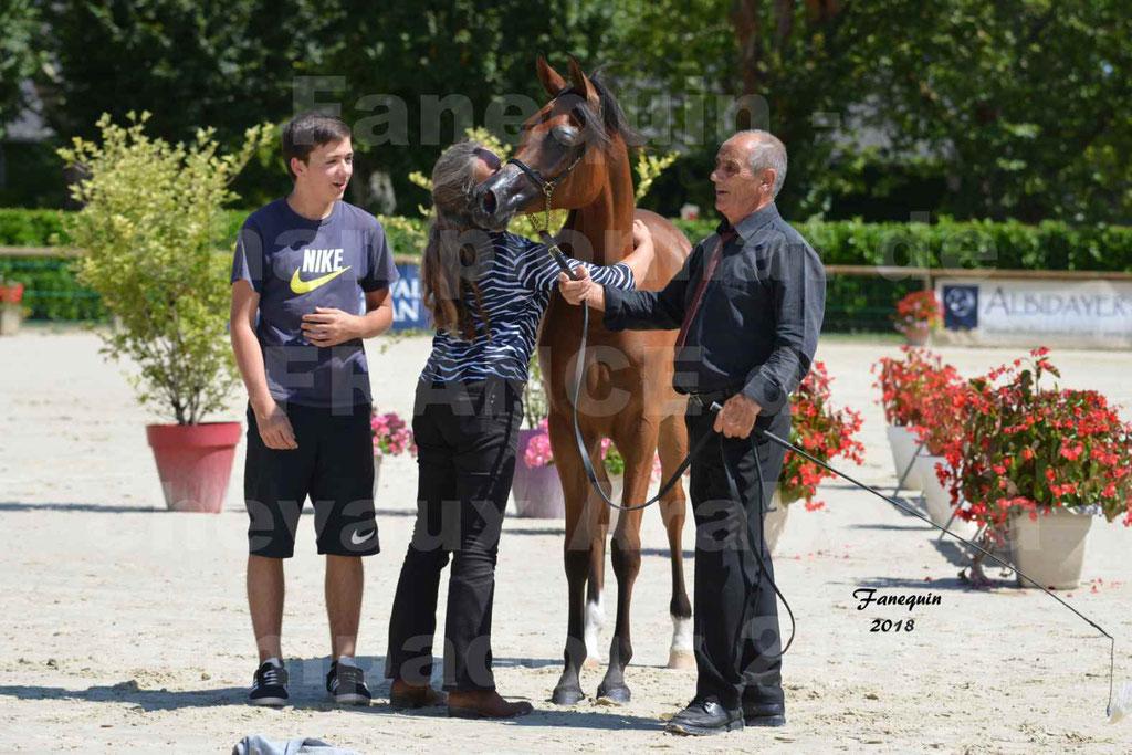 Championnat de FRANCE des chevaux Arabes à Pompadour en 2018 - SH CHARISMA - Notre Sélection - 35
