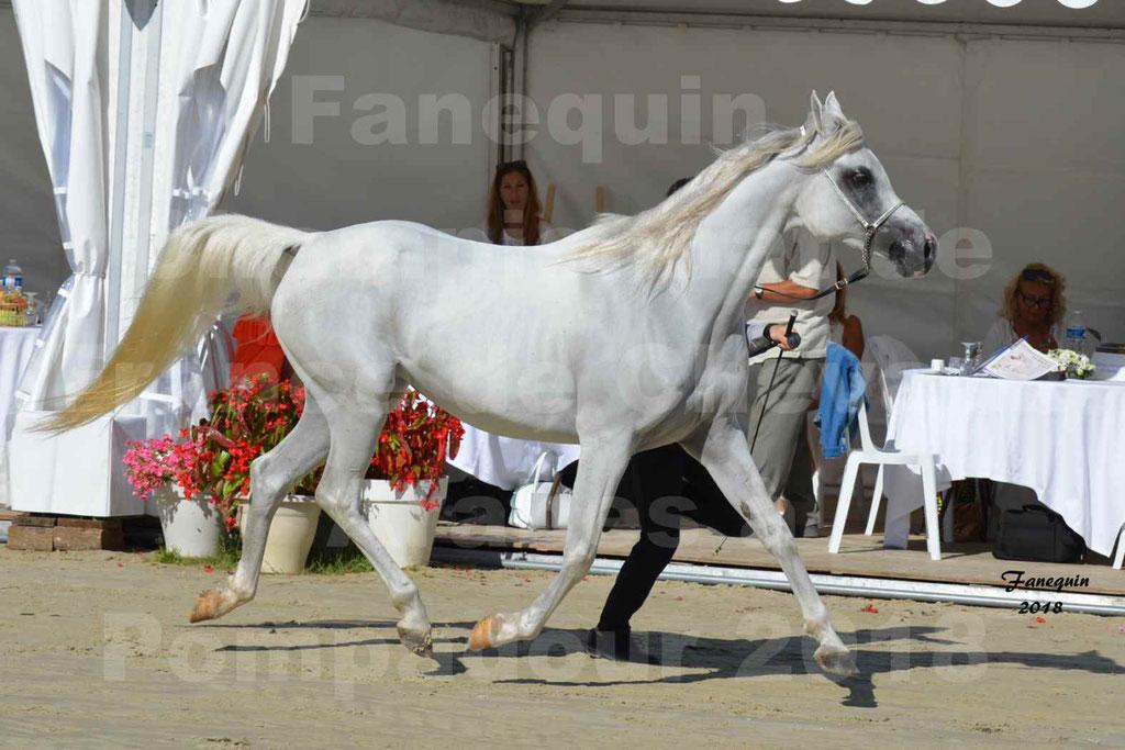 Championnat de FRANCE de chevaux Arabes à Pompadour en 2018 - ESTALIA - 10