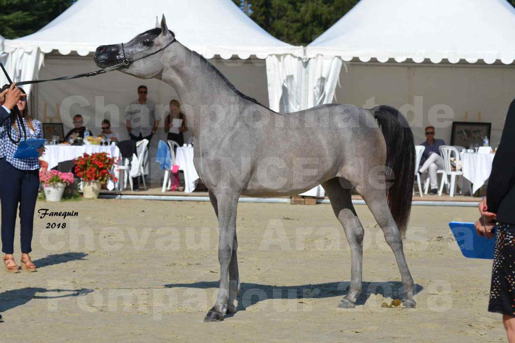 Championnat de FRANCE de chevaux Arabes à Pompadour en 2018 - SANIA DU CAYRON - Notre Sélection - 46
