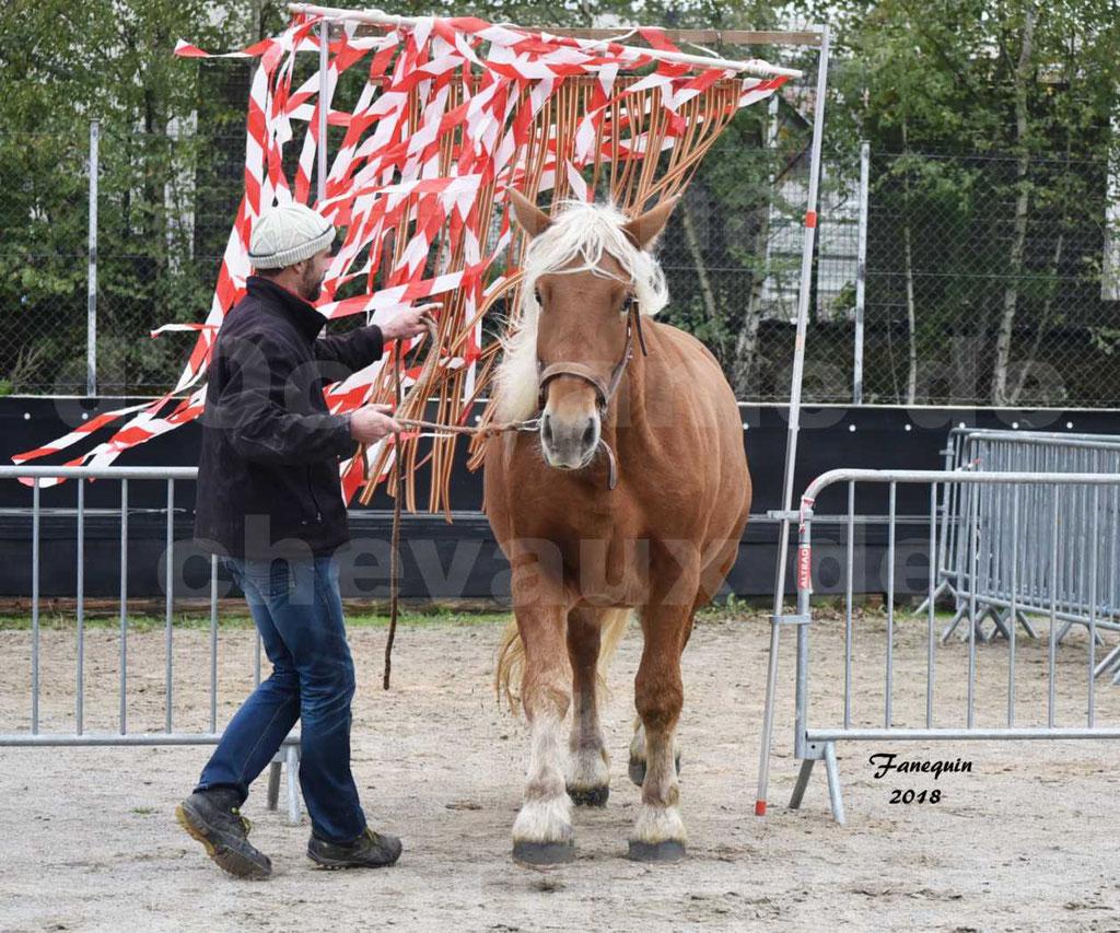 Concours Label Loisirs lors du concours Régional de chevaux de traits à REQUISTA en Octobre 2018 - 41