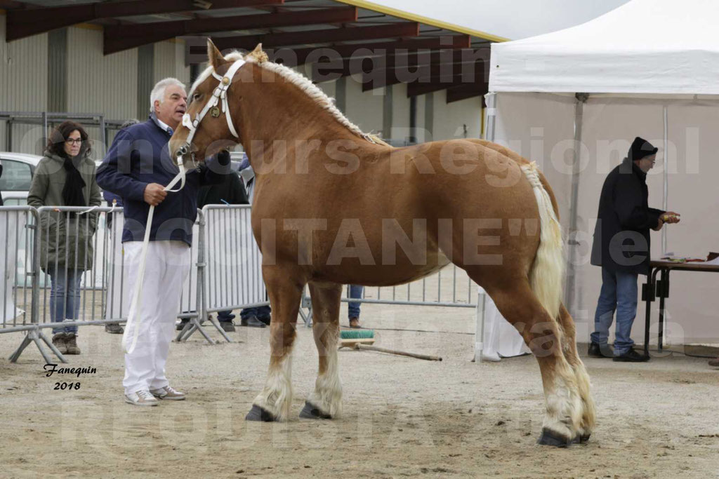 """Concours Régional """"OCCITANIE"""" de Chevaux de Traits à REQUISTA en 2018 - GRIOTTE DES PERRINES - 1"""
