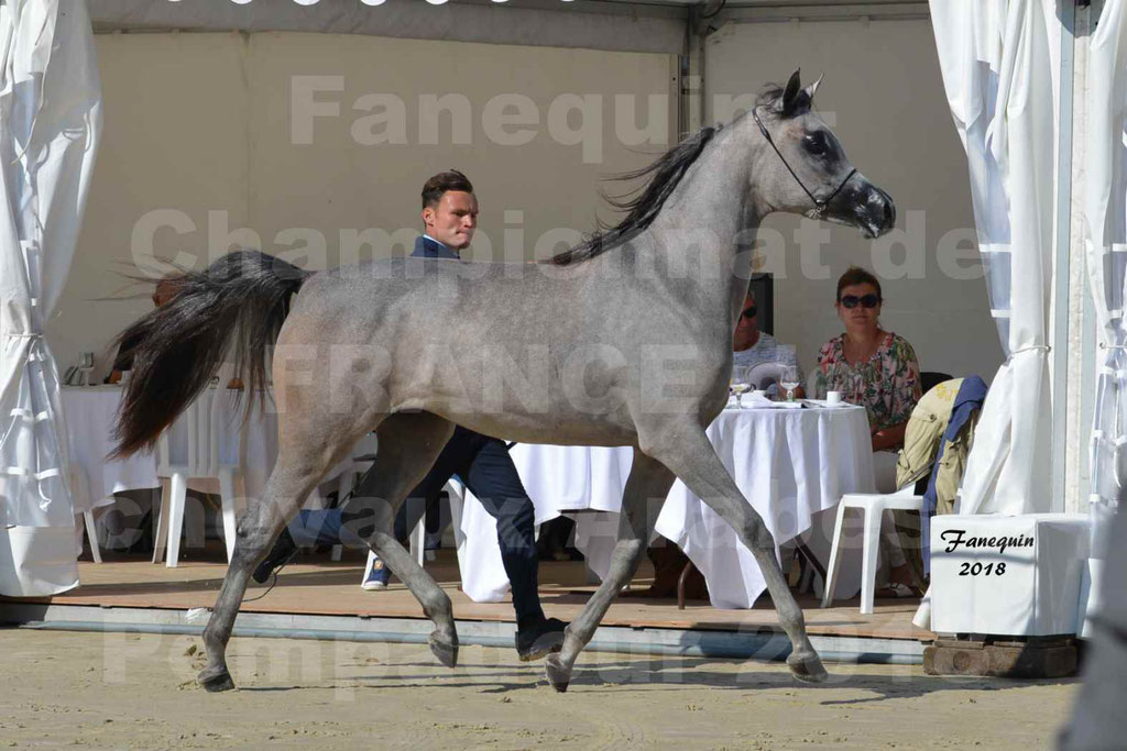 Championnat de FRANCE de chevaux Arabes à Pompadour en 2018 - SANIA DU CAYRON - Notre Sélection - 24