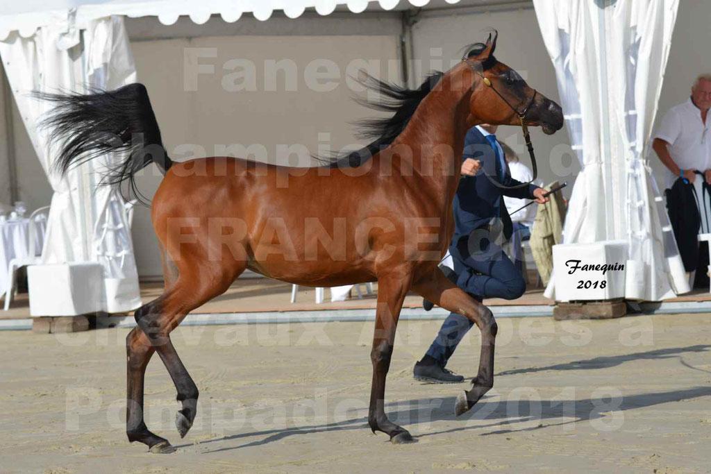 Championnat de FRANCE de chevaux Arabes à Pompadour en 2018 - BO AS ALEXANDRA - Notre Sélection - 17
