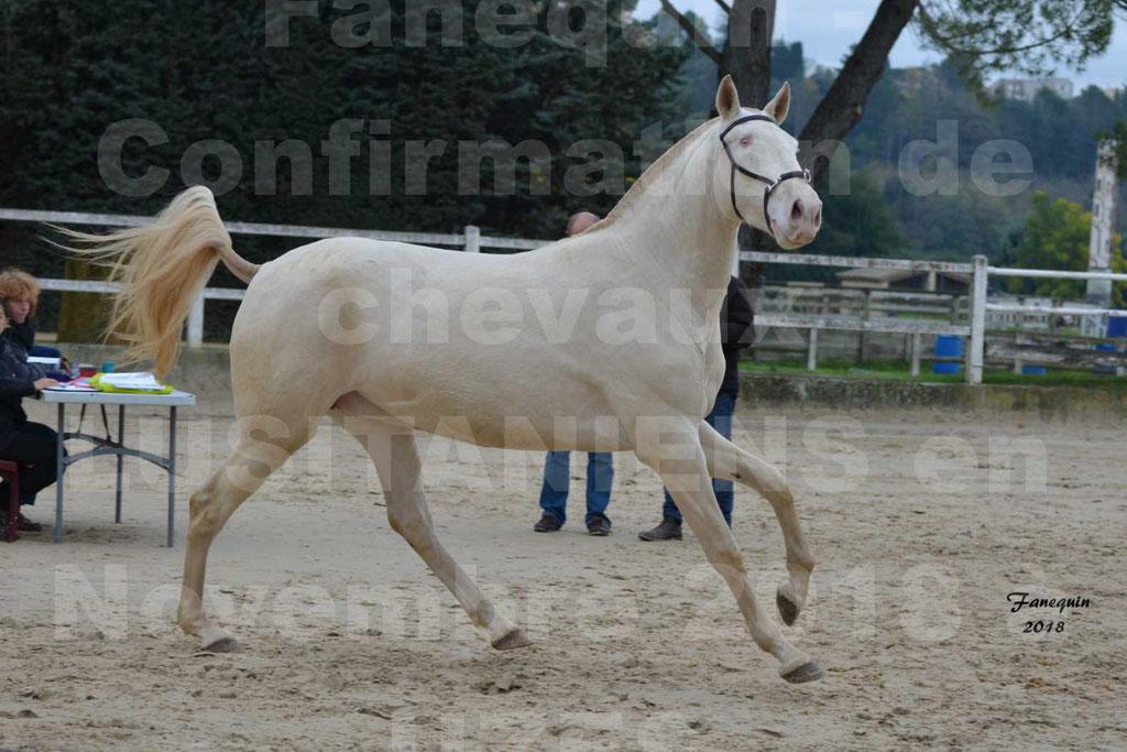 Confirmation de chevaux LUSITANIENS aux Haras d'UZES Novembre 2018 - LOLIBLOU - 26