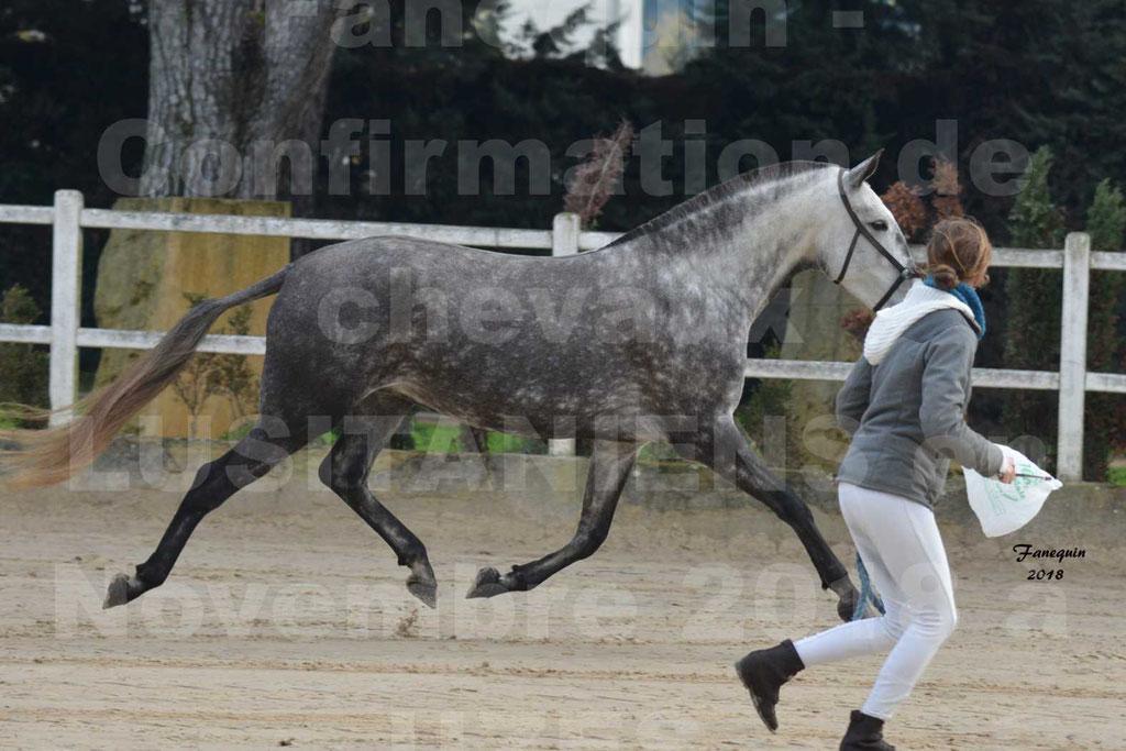 Confirmation de chevaux LUSITANIENS aux Haras d'UZES Novembre 2018 - JAVA DO REAL - 12
