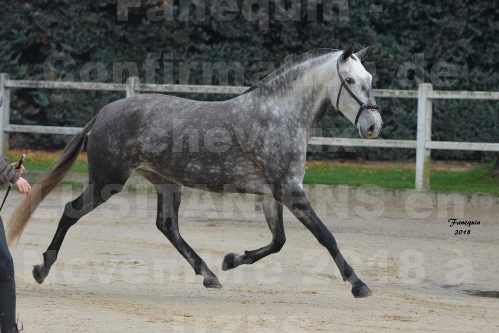 Confirmation de chevaux LUSITANIENS aux Haras d'UZES Novembre 2018 - JAVA DO REAL - 24
