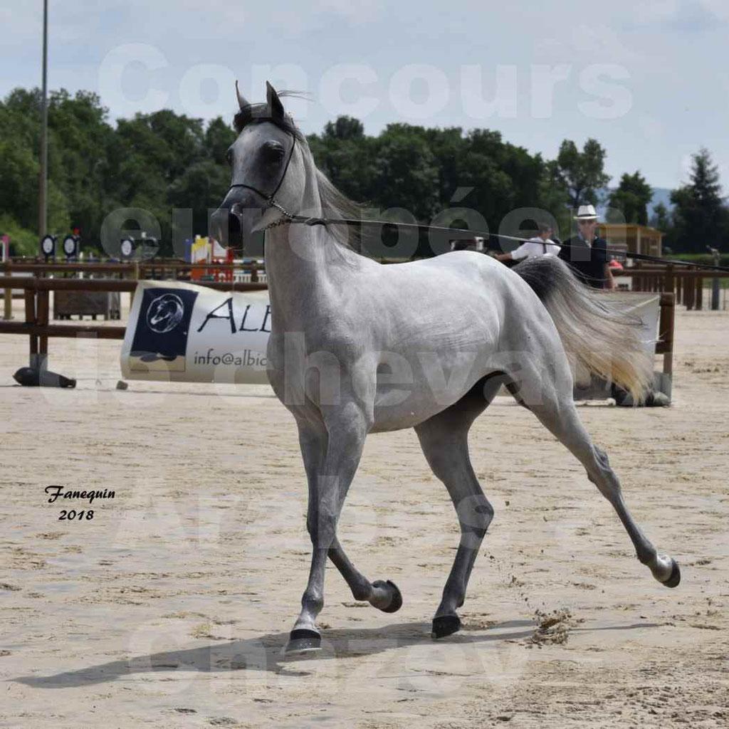 Concours Européen de chevaux Arabes à Chazey sur Ain 2018 - FATIN ALBIDAYER - Notre Sélection - 02