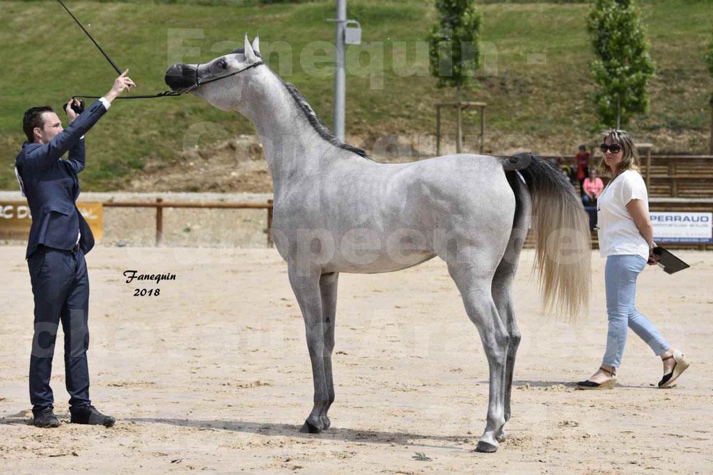 Concours Européen de chevaux Arabes à Chazey sur Ain 2018 - FATIN ALBIDAYER - Notre Sélection - 13