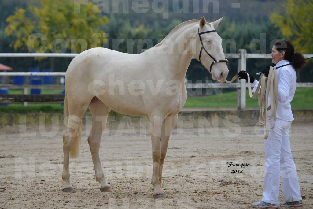 Confirmation de chevaux LUSITANIENS aux Haras d'UZES Novembre 2018 - LOLIBLOU - 37