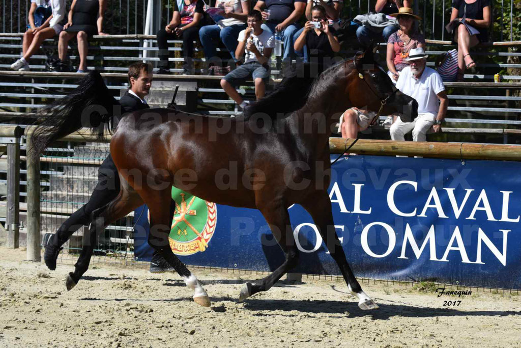 Championnat de France de chevaux Arabes à Pompadour les 19 & 20 Août 2017 - ESMAELIA AL HEVAN - 01