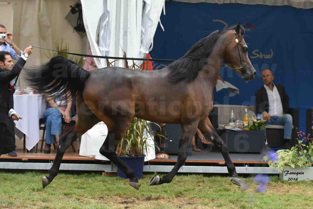 International Arabian Horse Show B de VICHY 2016 - MILLIAR - Notre Sélection - 08