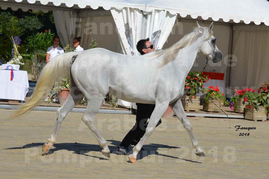 Championnat de FRANCE de chevaux Arabes à Pompadour en 2018 - ESTALIA - 32