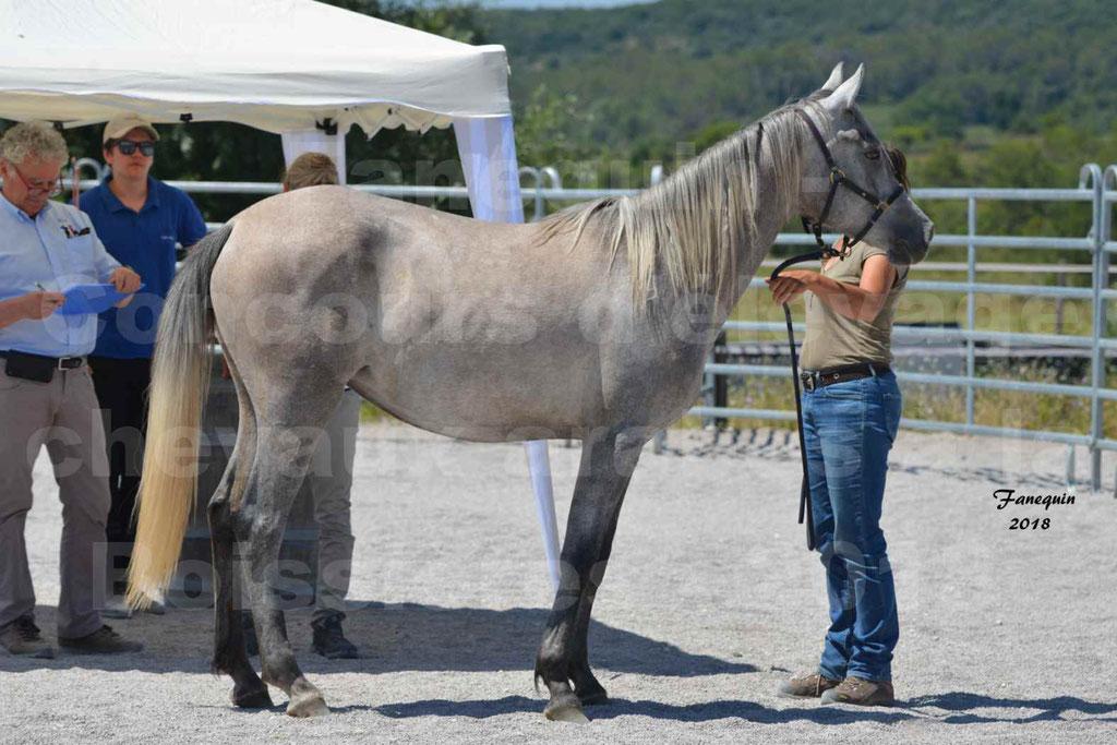 Concours d'Elevage de chevaux Arabes  le 27 juin 2018 à la BOISSIERE - GAZAK D'AURIERES - 01