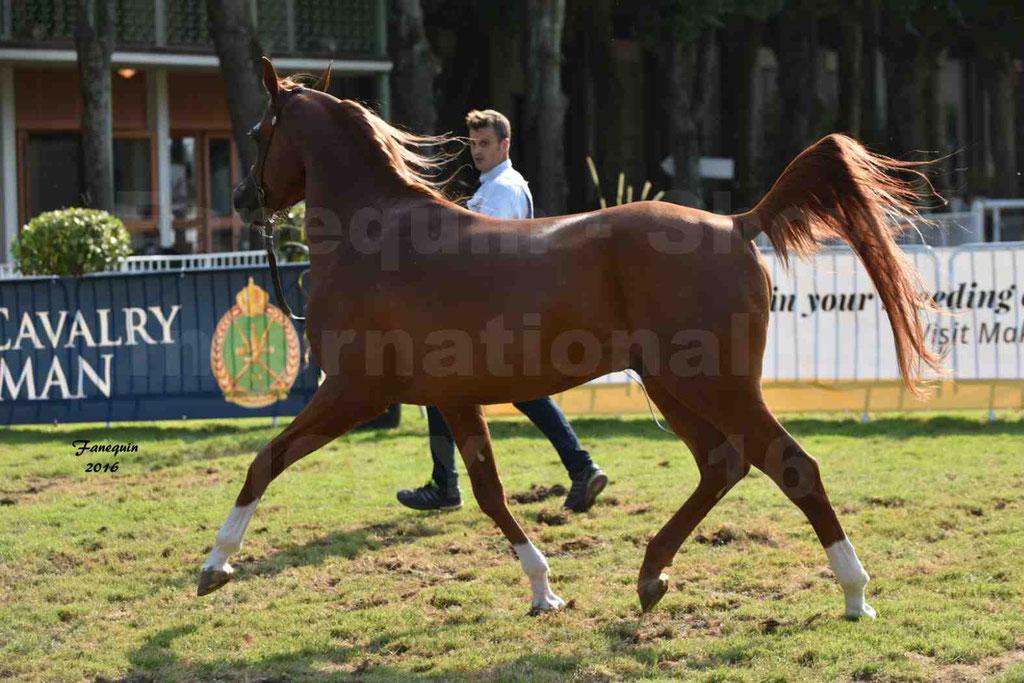 International Arabian Horse Show B de VICHY 2016 - DZHARI NUNKI - Notre Sélection - 32