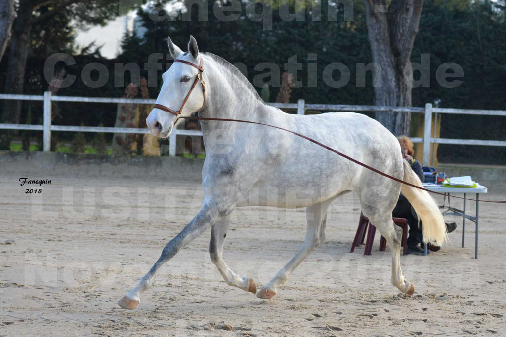 Confirmation de chevaux LUSITANIENS aux Haras d'UZES Novembre 2018 - LUTECE DU CASTEL - 20