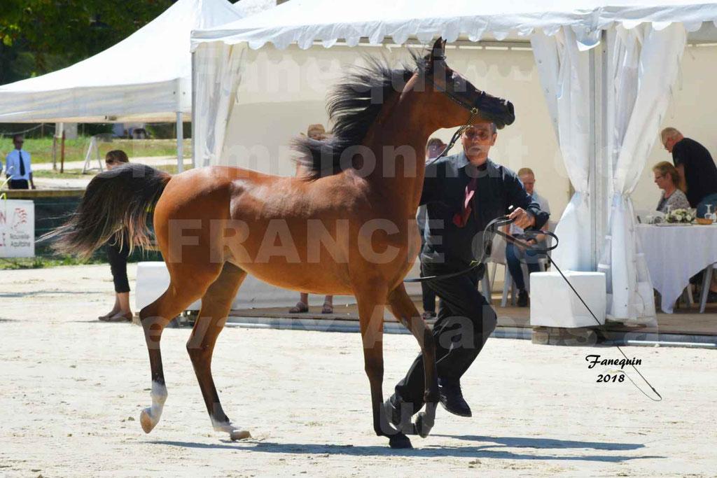 Championnat de FRANCE des chevaux Arabes à Pompadour en 2018 - SH CHARISMA - Notre Sélection - 10