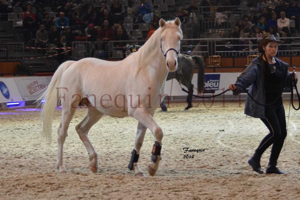 Show des races - Chevaux BARBE 22