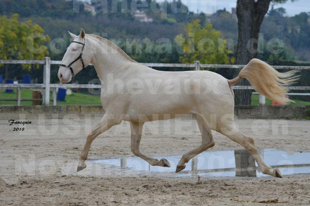 Confirmation de chevaux LUSITANIENS aux Haras d'UZES Novembre 2018 - LOLIBLOU - 16