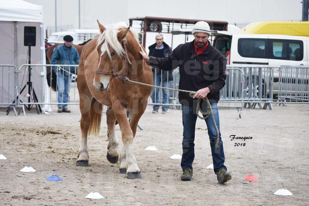 Concours Label Loisirs lors du concours Régional de chevaux de traits à REQUISTA en Octobre 2018 - 21