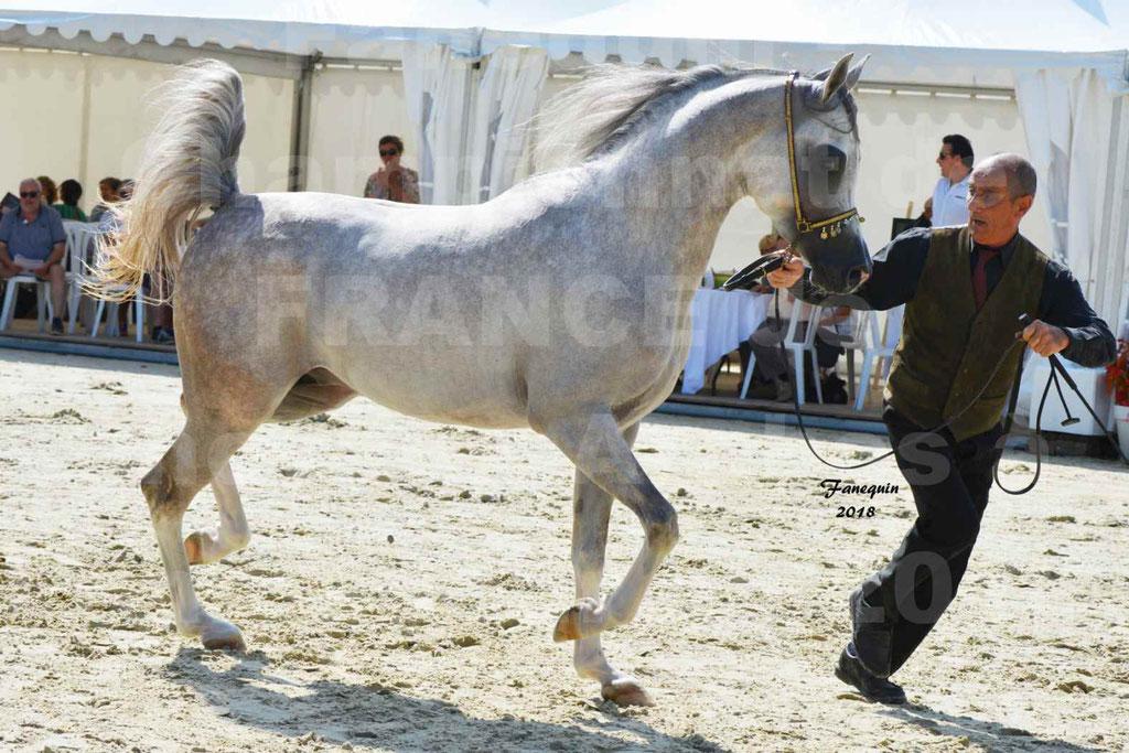 Championnat de FRANCE de chevaux Arabes à Pompadour en 2018 - SH CHAGALL - Notre Sélection - 03
