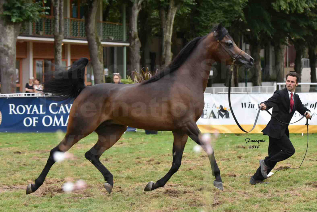 International Arabian Horse Show B de VICHY 2016 - MILLIAR - Notre Sélection - 04