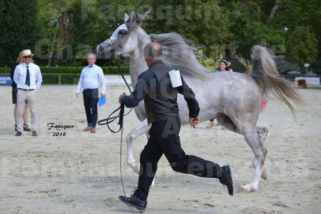 Championnat de FRANCE de chevaux Arabes à Pompadour en 2018 - SH CHAGALL - Notre Sélection - 08