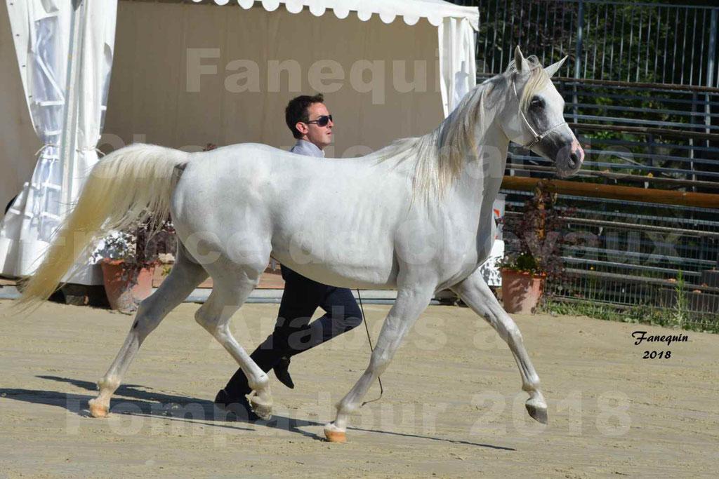Championnat de FRANCE de chevaux Arabes à Pompadour en 2018 - ESTALIA - 19