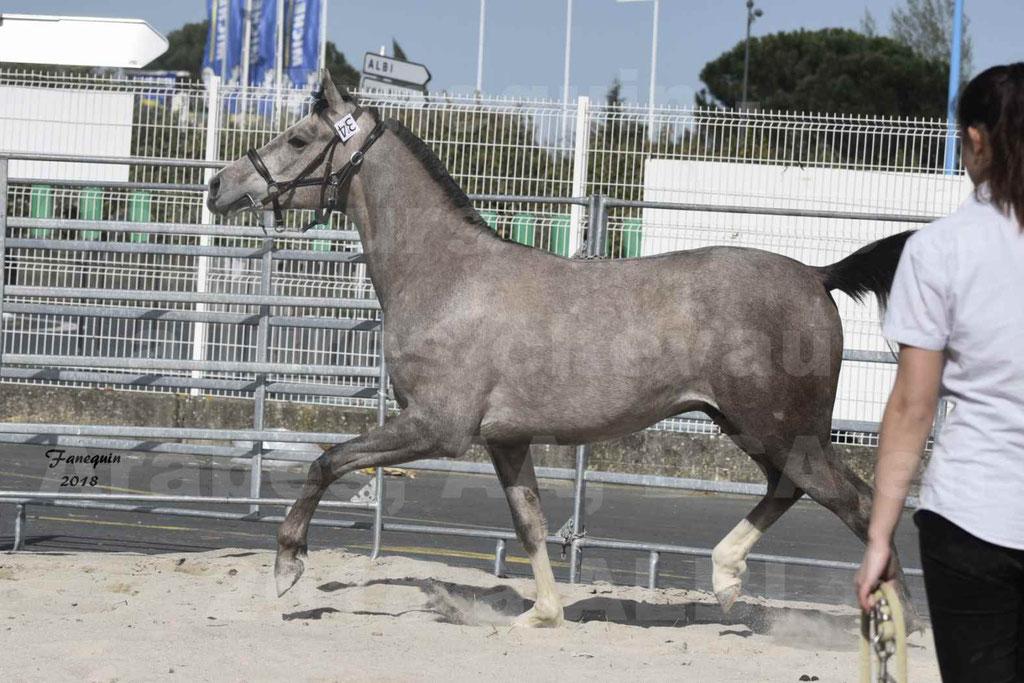 Concours d'élevage de Chevaux Arabes - Demi Sang Arabes - Anglo Arabes - ALBI les 6 & 7 Avril 2018 - GRIMM DE DARRE - Notre Sélection - 05