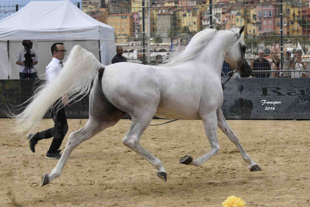Show International de chevaux ARABES de MENTON 2016 - AJA ANGELO - 21