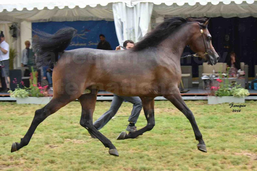 International Arabian Horse Show B de VICHY 2016 - MILLIAR - Notre Sélection - 28